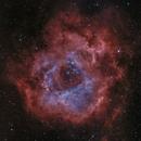 Rosette Nebula NGC 2244,                                Nick Axaris