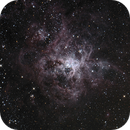 NGC 2070 Tarantula,                                Paul Storey