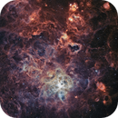 Tarantula Nebula,                                Zhuoqun Wu