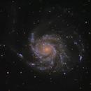 M101 (Pinwheel Galaxy),                                Joel Shepherd