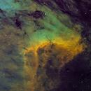 Pelican close-up in Hubble,                                north.stargazer