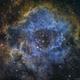 C49 (NGC2237) - Rosette Nebula SHO,                                Richard Bratt