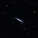 SuperNova in Messier 82 (Cigar Galaxy),                                Yohan Riou