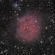 IC-5146 (Cocoon Nebula),                                Joel Shepherd