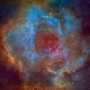 The Rosette Nebula - Hubble Palette,                                Eric Coles (coles44)