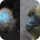 NGC2174 Monkey Head Nebula in SHO-LRGB,                                equinoxx