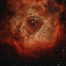 SH 2-275 Rosette Nebular,                                Anders Quist Hermann