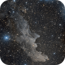 IC 2118 Witch Head Nebula,                                Chad Andrist