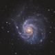 M101,                                Lyn Peterson