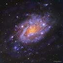 NGC 2403,                                Göran Nilsson