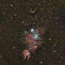 Christmas tree cluster,                                Bernard DELATTRE