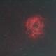 NGC2244  Rosette Nebula,                                yshoon