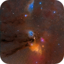 Rho Ophiuchi & the Blue Horsehead Nebula,                                David McGarvey