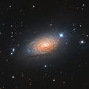 Messier 63,                                Teagan Grable
