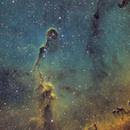 IC1396 SHO,                                Siegfried Hold
