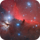 IC434,                                Sushiraptor