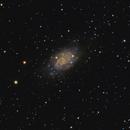 NGC 2403,                                diurnal
