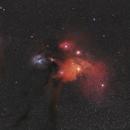 Rho Ophiuchi Clouds 135mm,                                Peter64