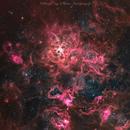 Tarantula Nebula - NGC 2070,                                Delberson