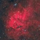 Red Lion,                                Tudor Chibacu