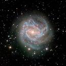 M83 Southern Pinwheel,                                Darren