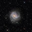 Southern Pinwheel. M83,                                Andrew Lockwood