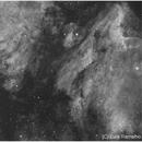 NGC 7000 (North America Nebula) and IC5070 (Pelican Nebula),                                Luís Ramalho