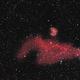IC 2177  the Seagull Nebula,                                RonAdams
