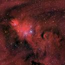 Christmas Tree Nebula - NGC2264,                                Matthias Steiner