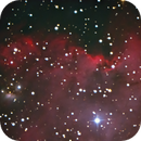 NGC 2175 -part of Monkey Head,                                Günther Eder
