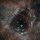 Rosette Nebula Core: Bi-Color,                                Joel Shepherd