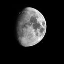 Mond mit Goldenem Henkel,                                Bruno