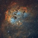 IC410 nébuleuse du tétard,                                Camille COLOMB