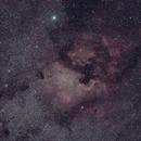 NGC 7000 and the Pelican Nebula amid star clouds in Cygnus,                                Ian Dixon