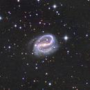 NGC 7479,                                Dan Wilson
