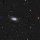 NGC 2903,                                Robin Clark - EAA imager
