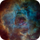The Rosette Nebula - Hubble Palette - Tone Map,                                Eric Coles (coles44)