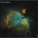 The Great Orion Nebula (M42),                                Shimon Avitan