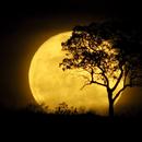 The Rising Moon in Sep. 09, 2014 - II,                                Odilon Simões Corrêa