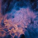 Flaming-Star SHO,                                Jonathan Young