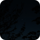 Venus through the bushes 65mm f8 1/100sec,                                Neil Emmans