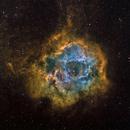 NGC 2237 Rosette Nebula in HST palette,                                John Ebersole