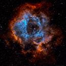 My first Hubble Palette - Rosette Nebula,                                Gregg Williams