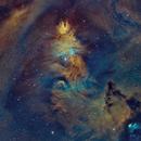 NGC 2264-la nébuleuse du cône SHO,                                astromat89