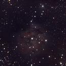 IC 5146 THE COCOON,                                Darktytanus