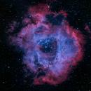 NGC2244 Rosette Nebula - HOO,                                Jim Carroll