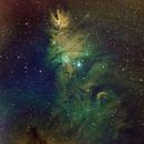 Christmas Tree Nebula,                                chuckp