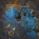 IC 410 the Tadpoles Nebula in Auriga,                                Mark Wetzel