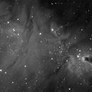 NGC2264 in Ha,                                Mauro Narduzzi