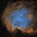 The Monkey Head Nebula,                                urban.astronomer